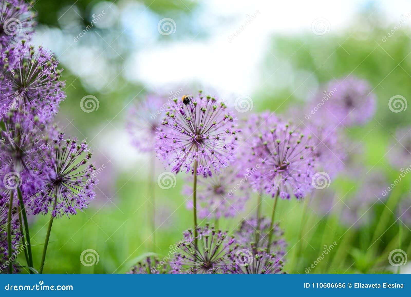 Violette bloemen op het groene gebied