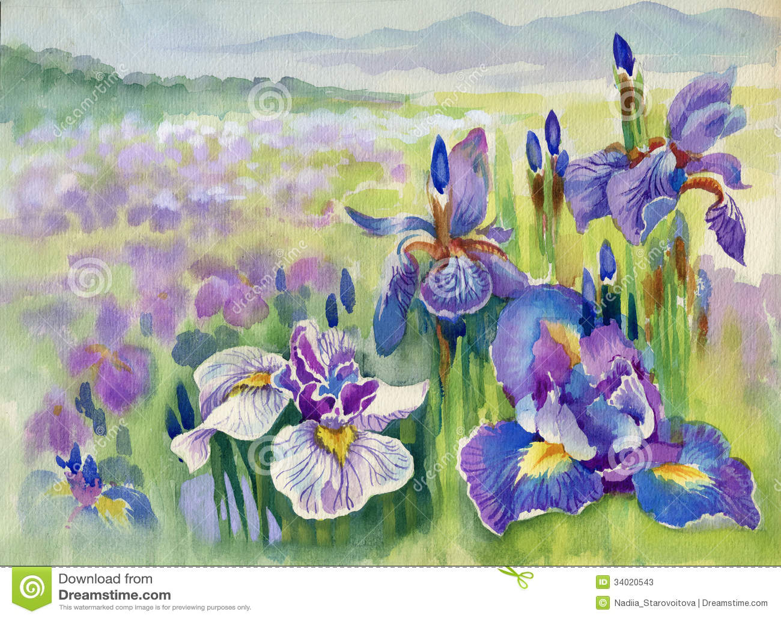Violette Blumen des Frühlinges auf Berg