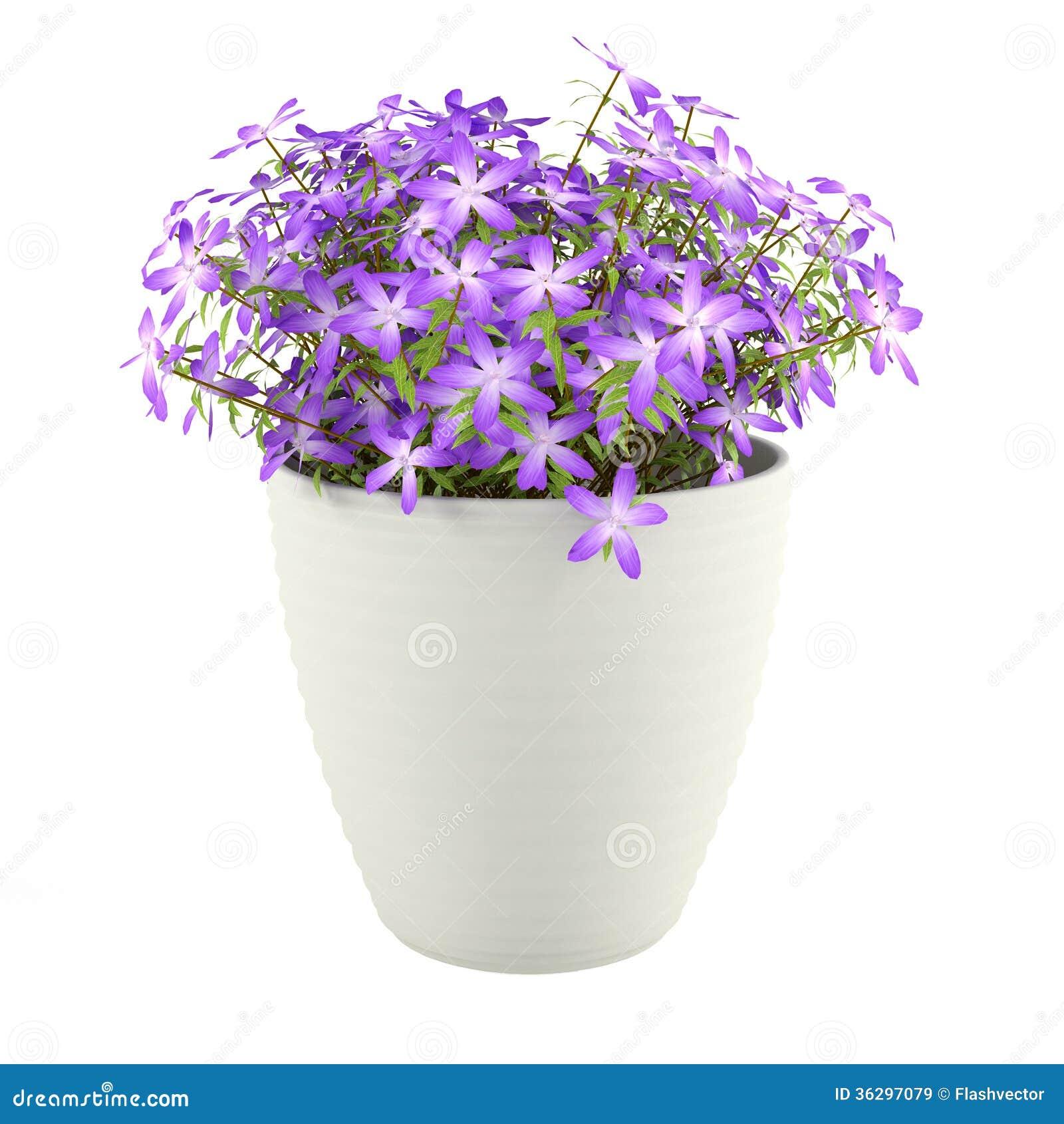 violette blumen im topf lizenzfreie stockbilder bild 36297079. Black Bedroom Furniture Sets. Home Design Ideas