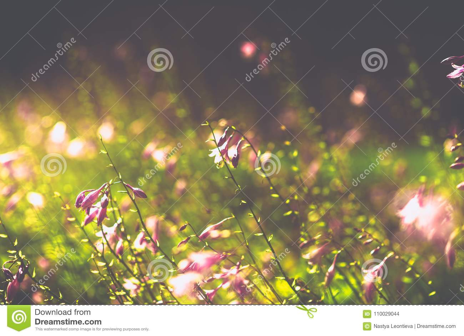 Violette dichte omhooggaande bloemen vage achtergrond