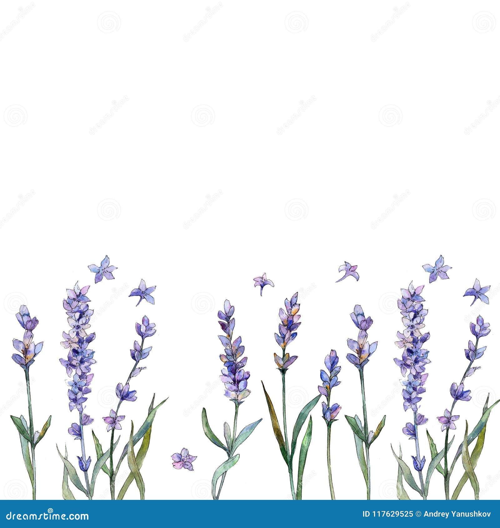 Violette lavendel Bloemen botanische bloem Het ornamentvierkant van de kadergrens
