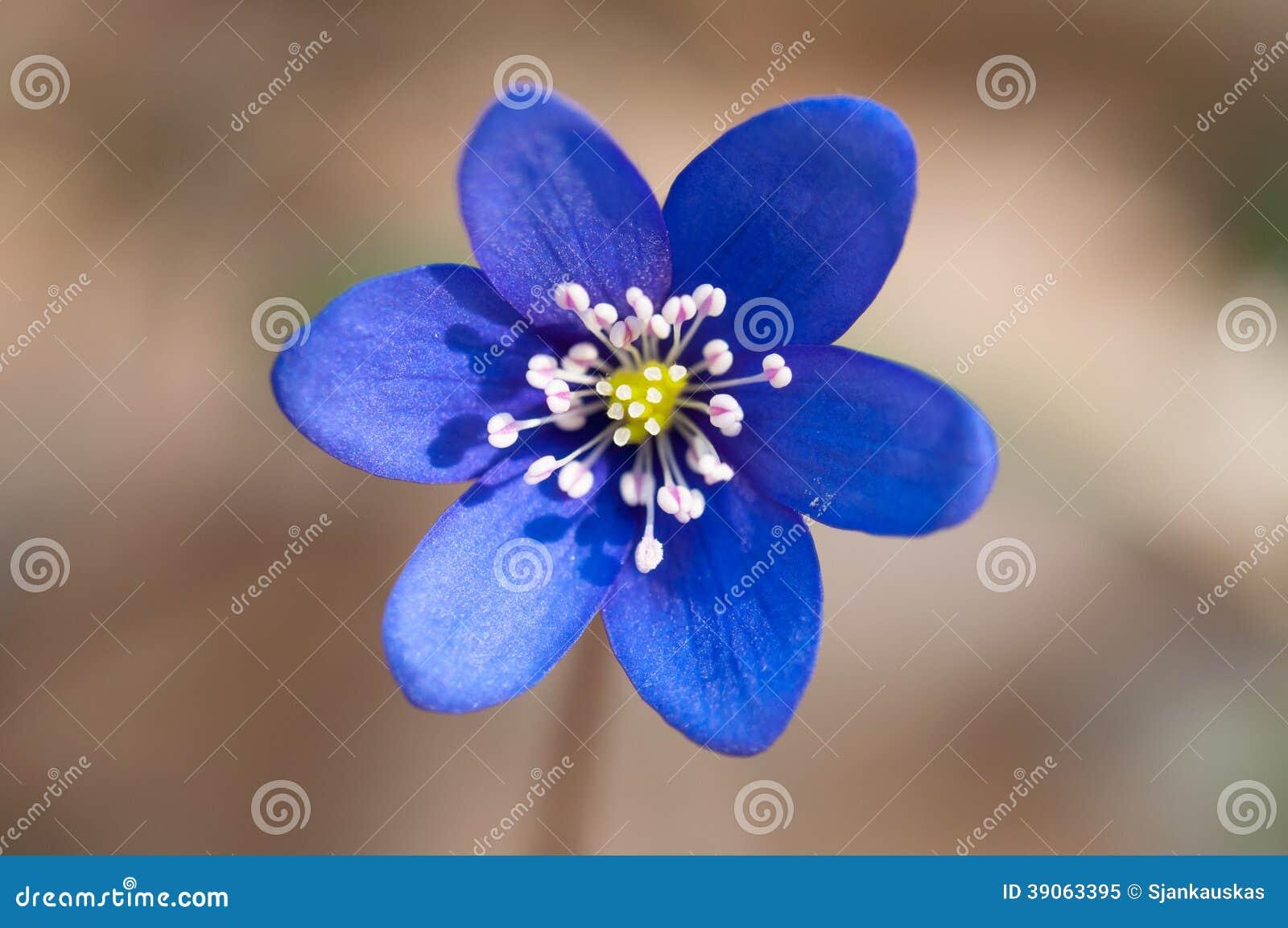 Violette macro