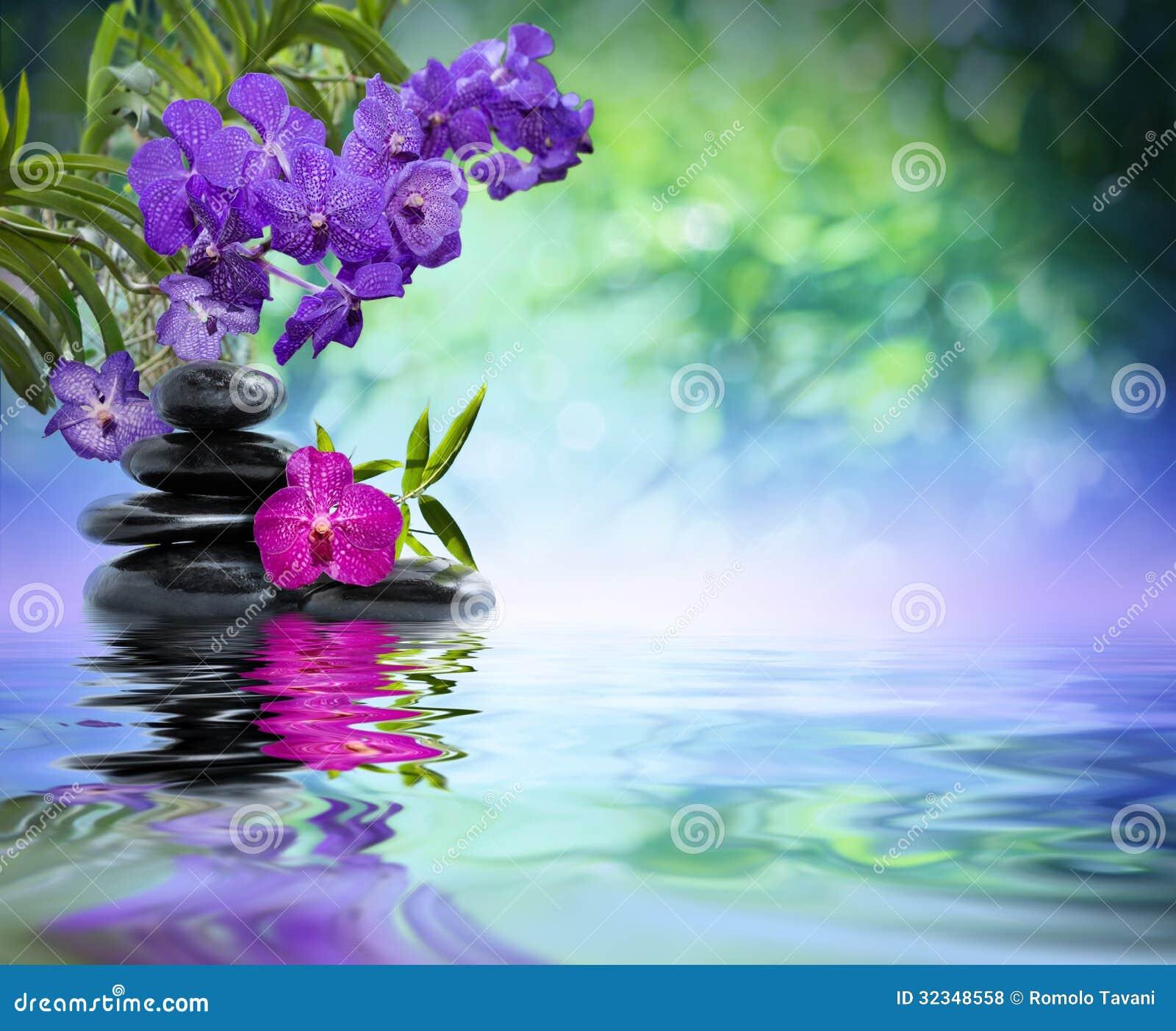 violette orchideen schwarze steine stockfoto bild 32348558. Black Bedroom Furniture Sets. Home Design Ideas