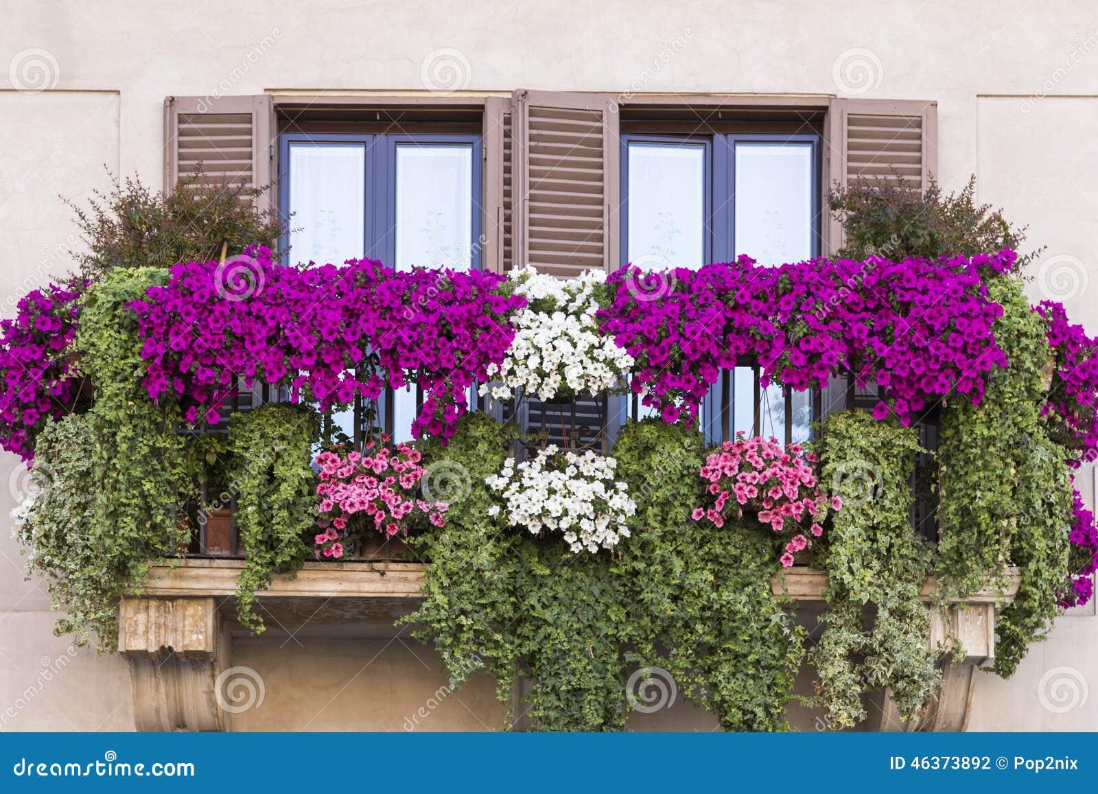 Violetter blumentopf auf balkon rom stockfoto bild von for Blumentopfe balkon