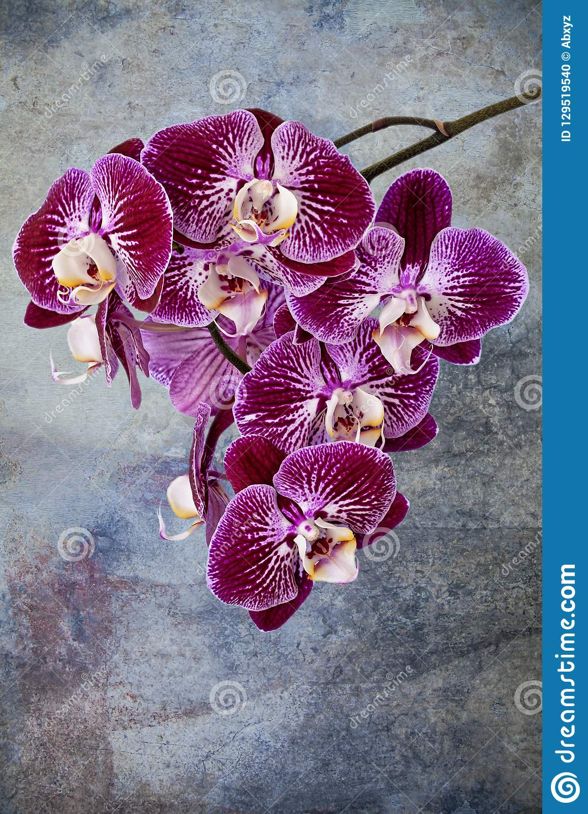 Violettes Orchideendetail