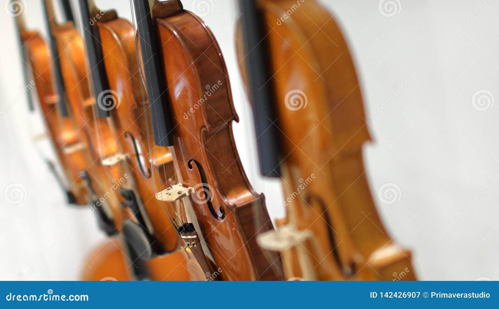 Violini su priorità bassa bianca