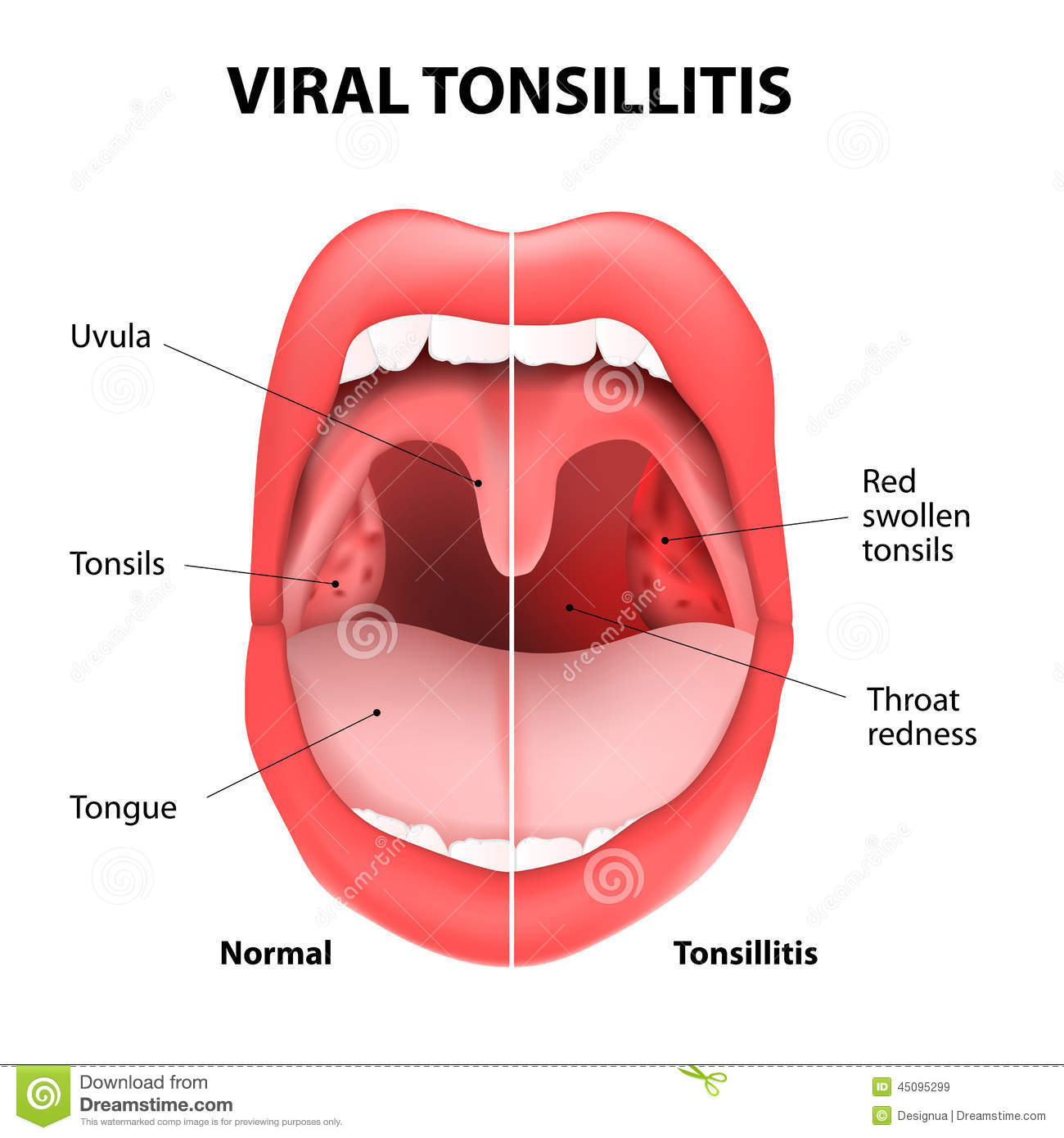 healthy human tongue