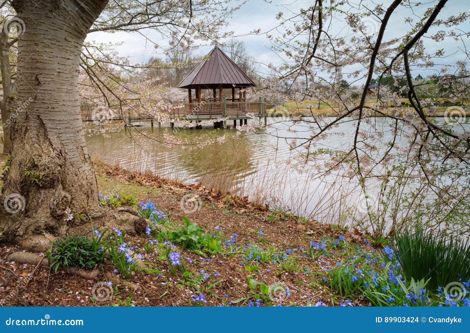 Virginia Meadowlark Gardens Spring Stock Photo - Image of blossoms ...