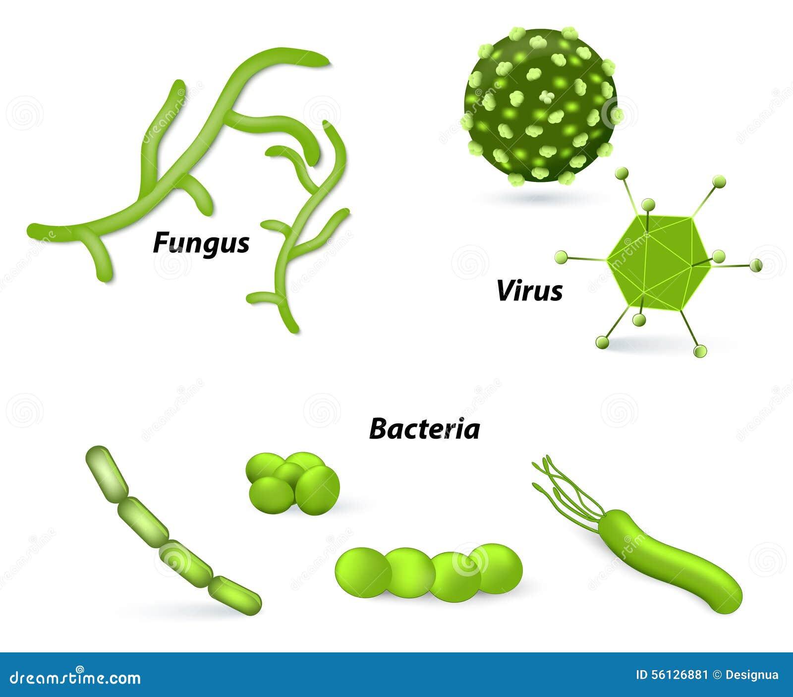 Virus, bacterias y hongos