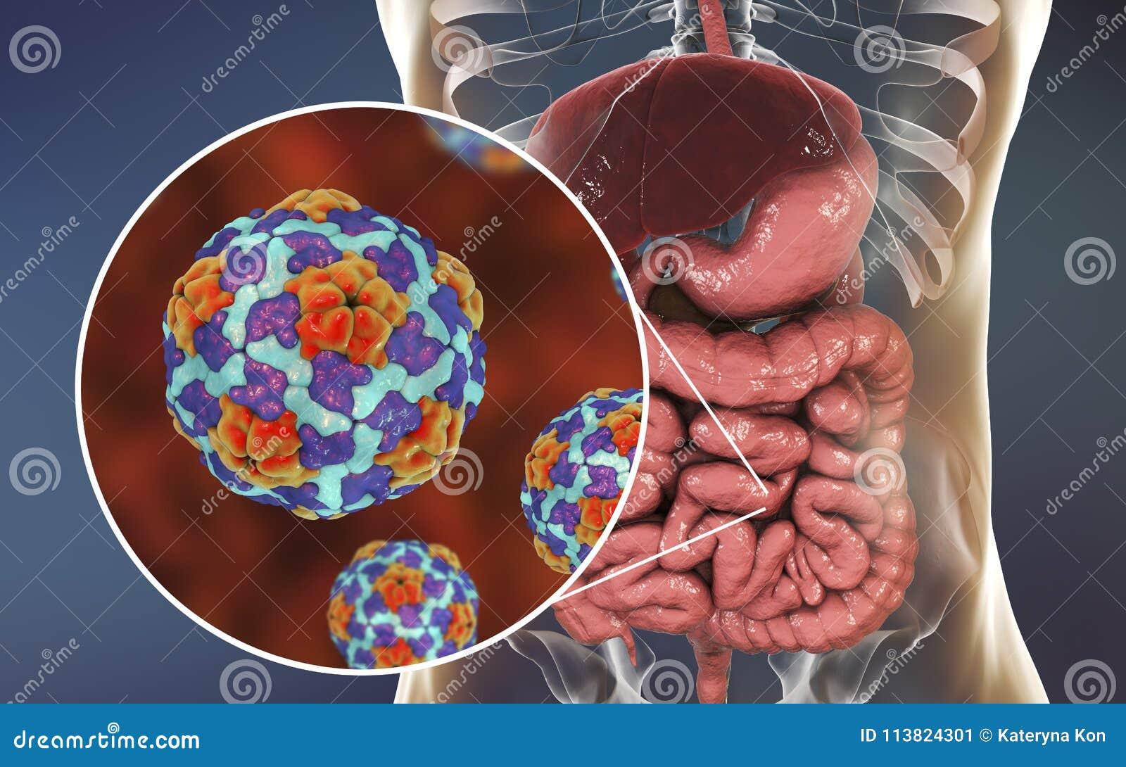 Virus De L'hépatite A Dans L'intestin Grêle Illustration Stock ...