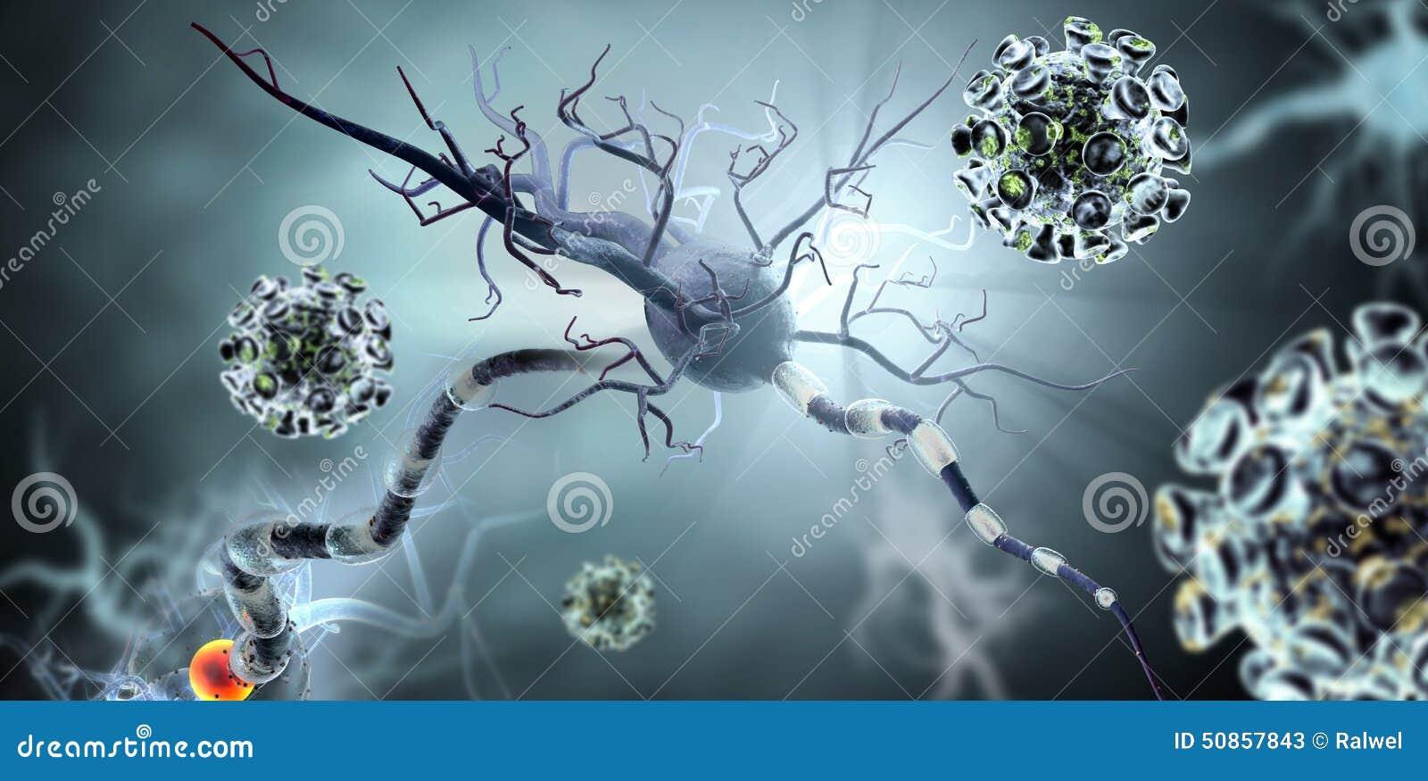 Virussen die zenuwcellen aanvallen