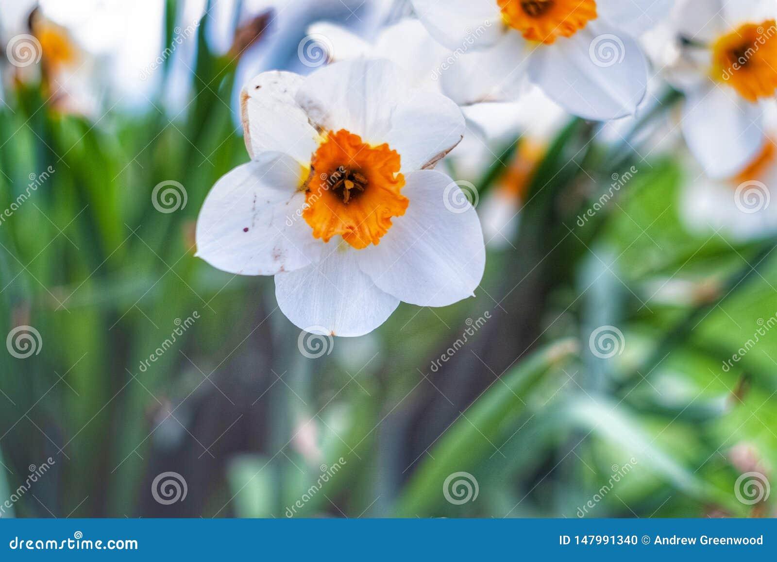 Visão borrada da flor