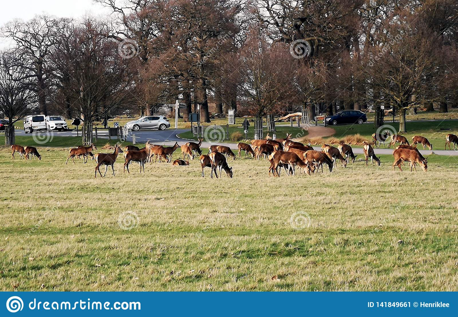 Visée de Richmond Park Deer