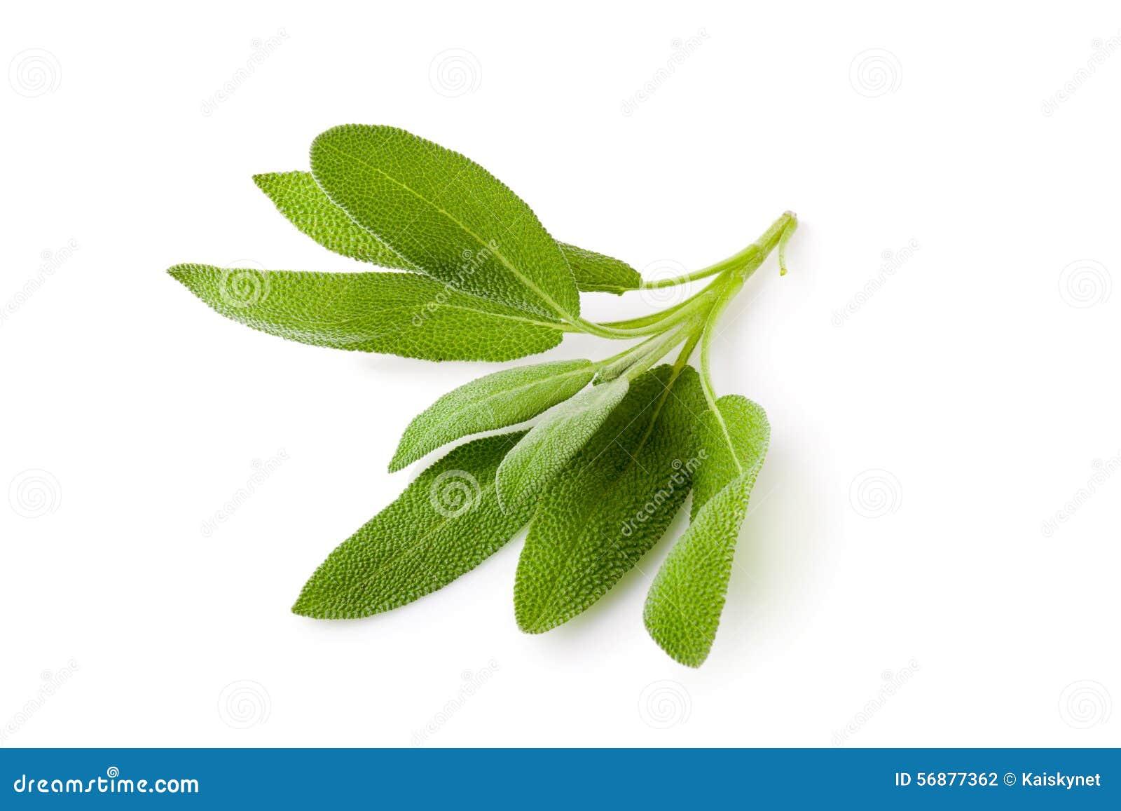 Vis växt på en vit bakgrund