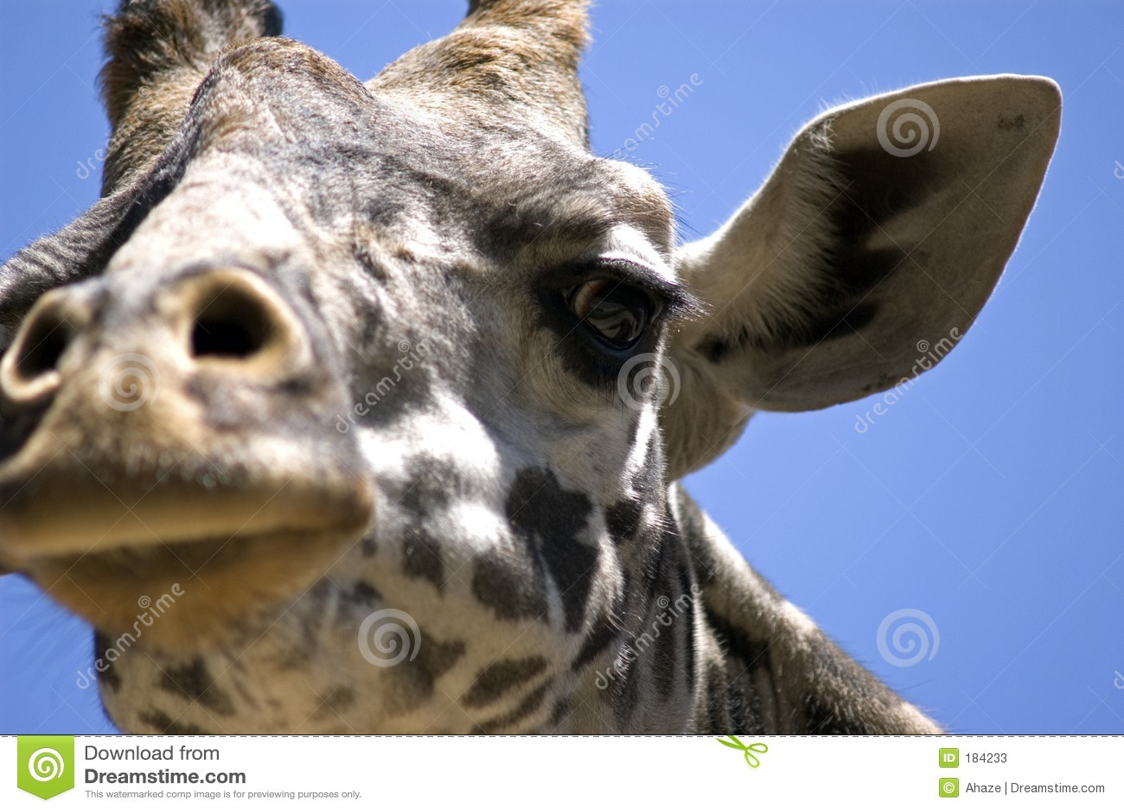 Visage de giraffe