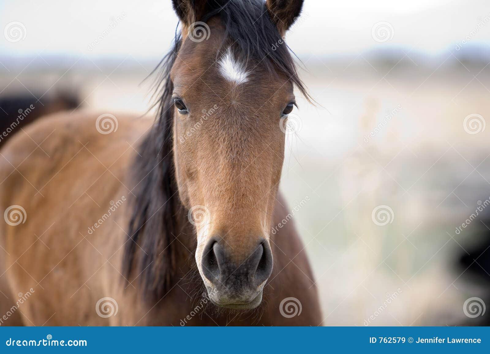 visage doux de cheval images libres de droits image 762579. Black Bedroom Furniture Sets. Home Design Ideas