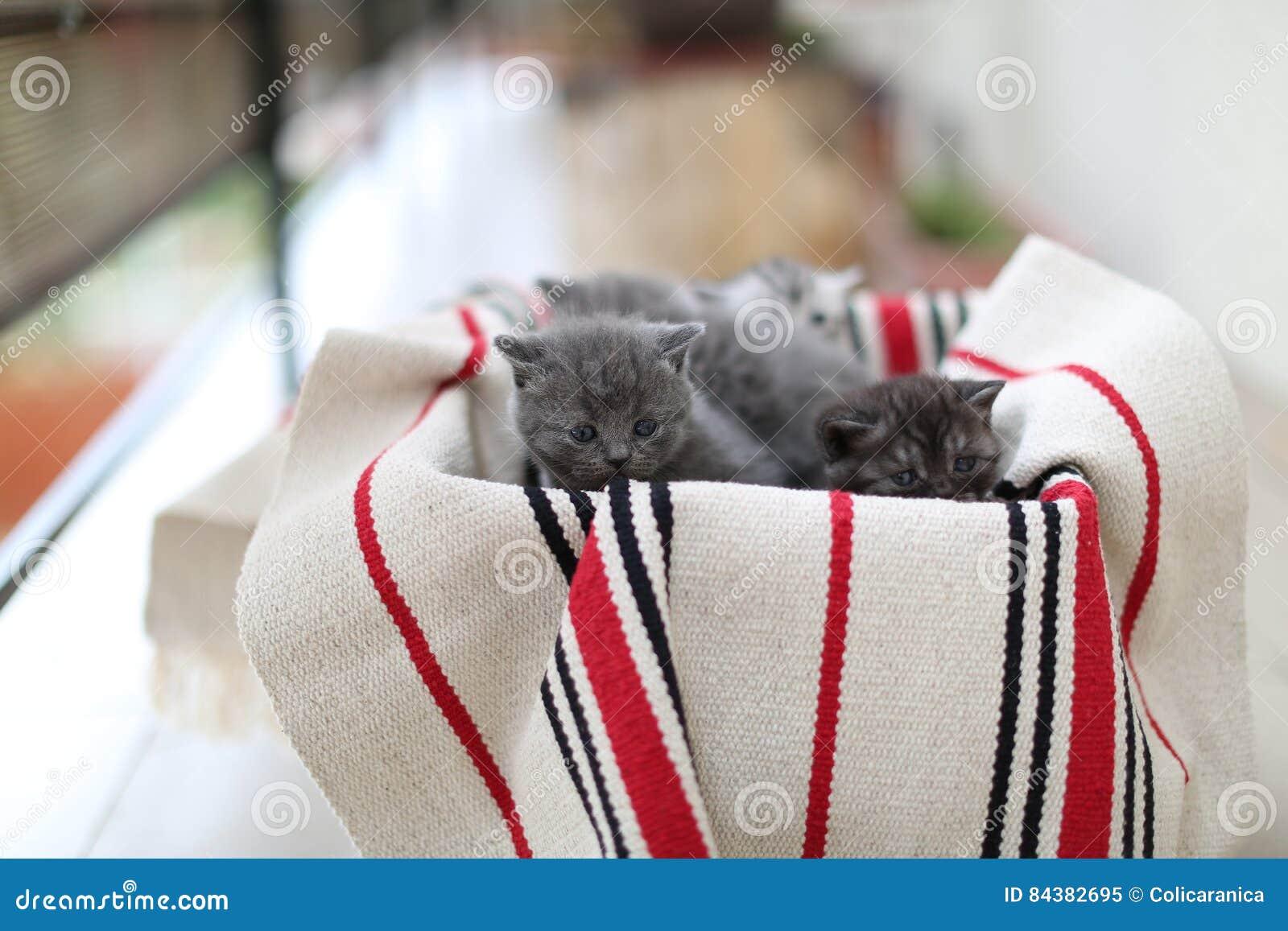 Visage mignon, chatons nouvellement soutenus