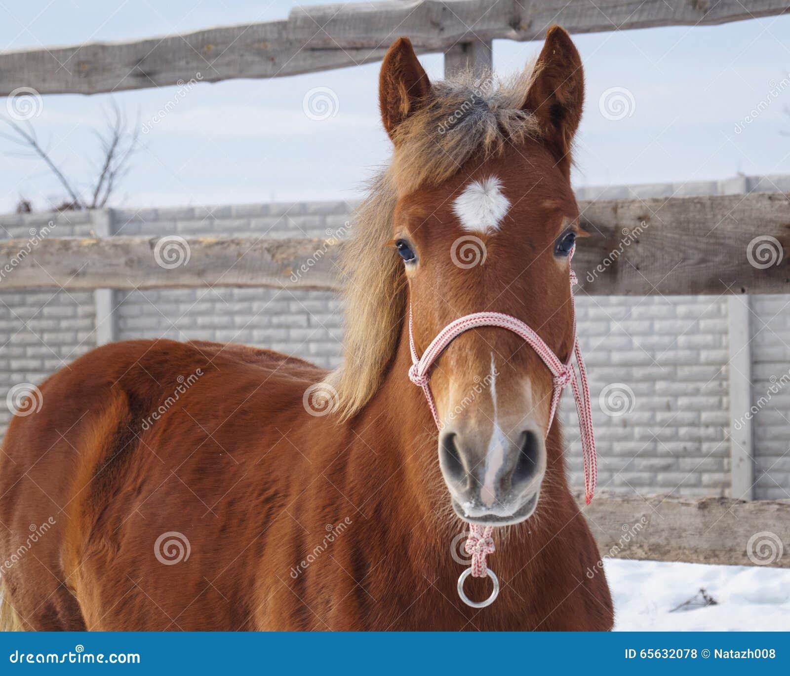Visage rouge de cheval sur le fond de ciel
