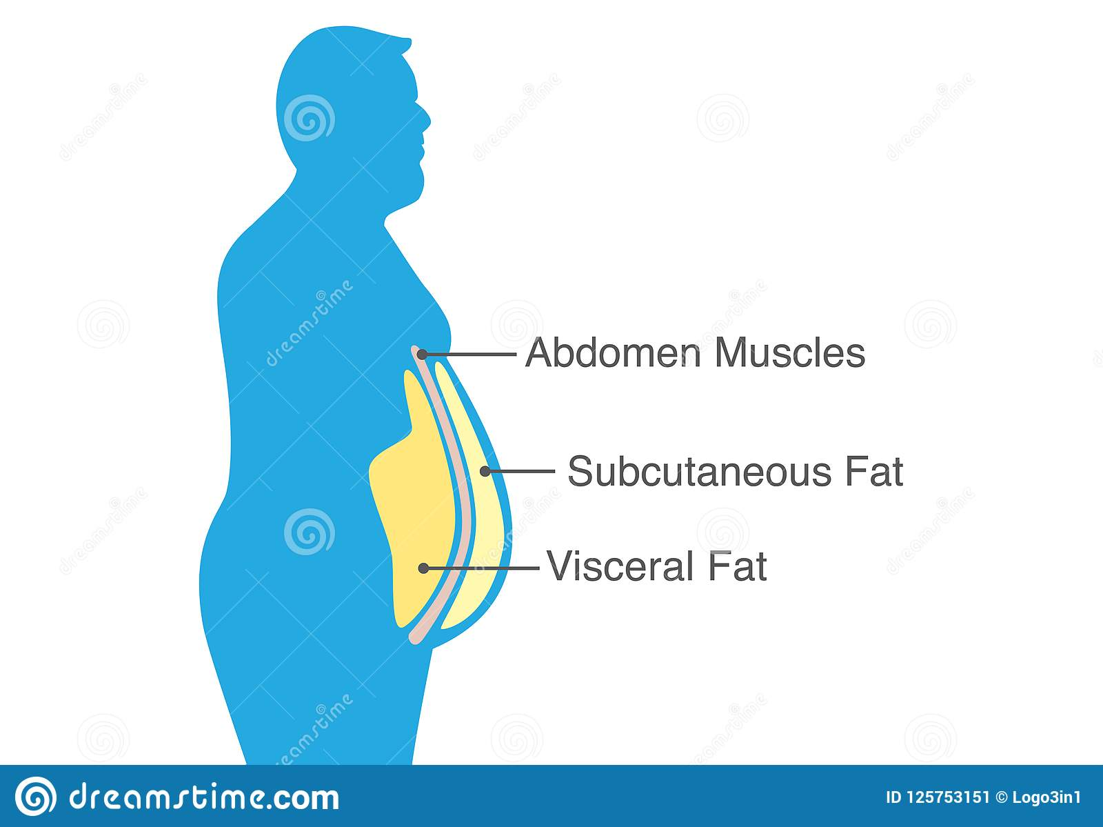 visceral fat and subcutaneous fat that accumulate around your waistline