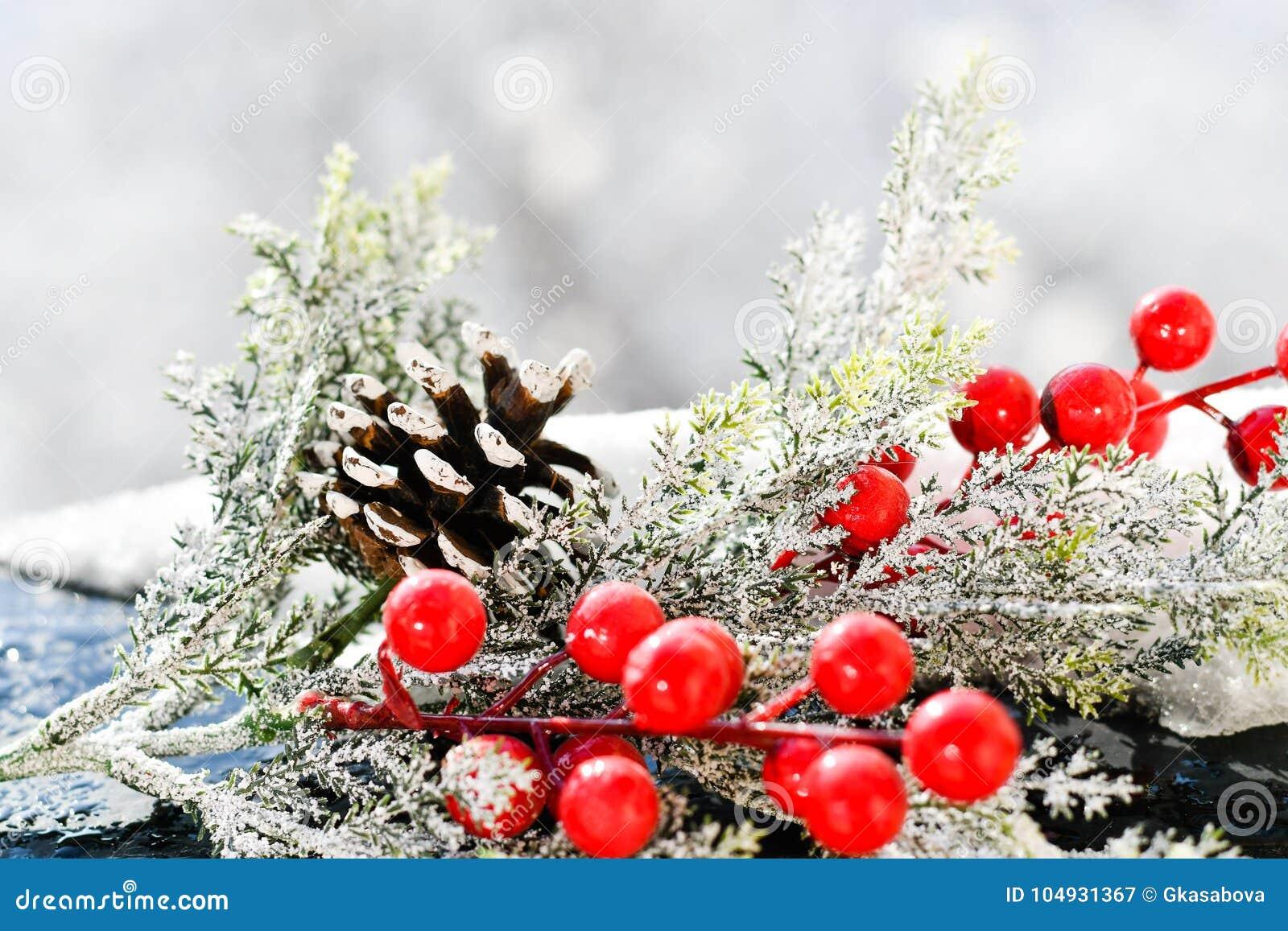 Vischio di Natale