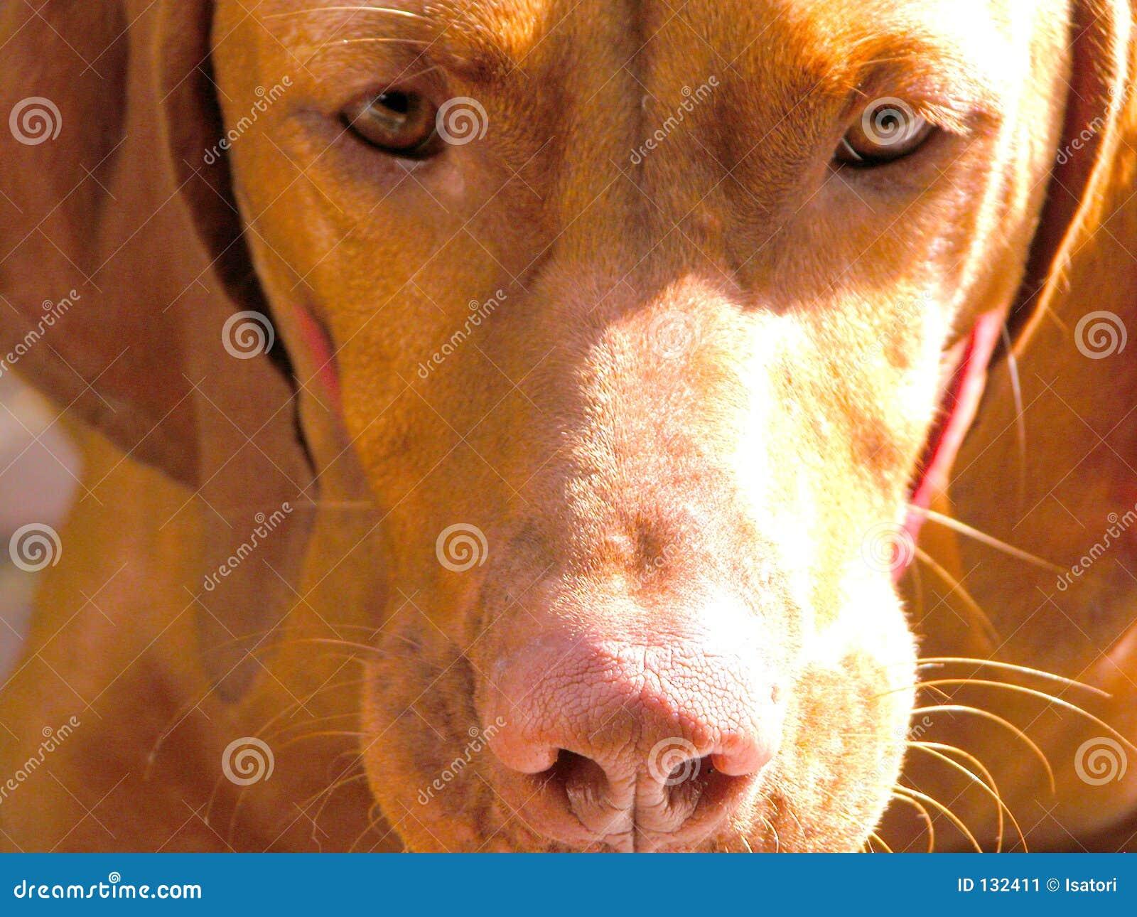 Vishler pup close up