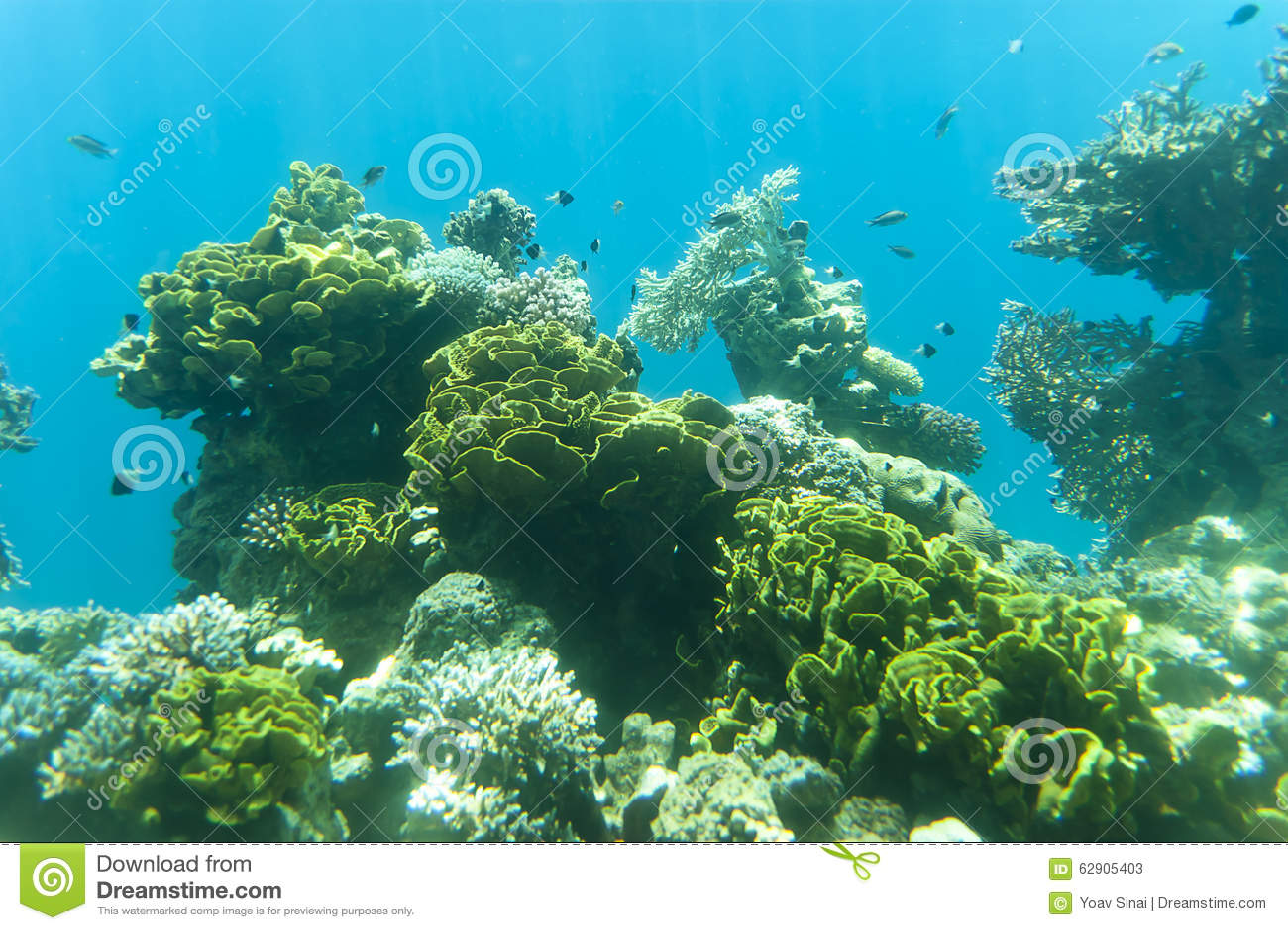 a73828f6b4 Visión debajo del agua imagen de archivo. Imagen de corales - 62905403