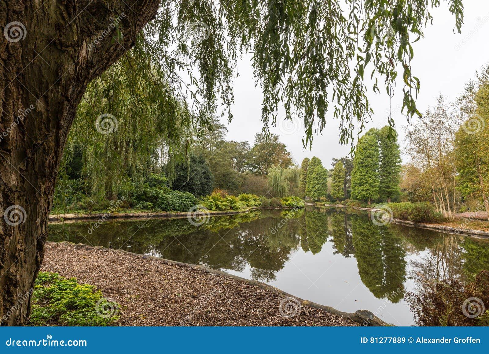 Visión Escénica Sobre Una Charca En Un Jardín Botánico Enmarcado Por ...