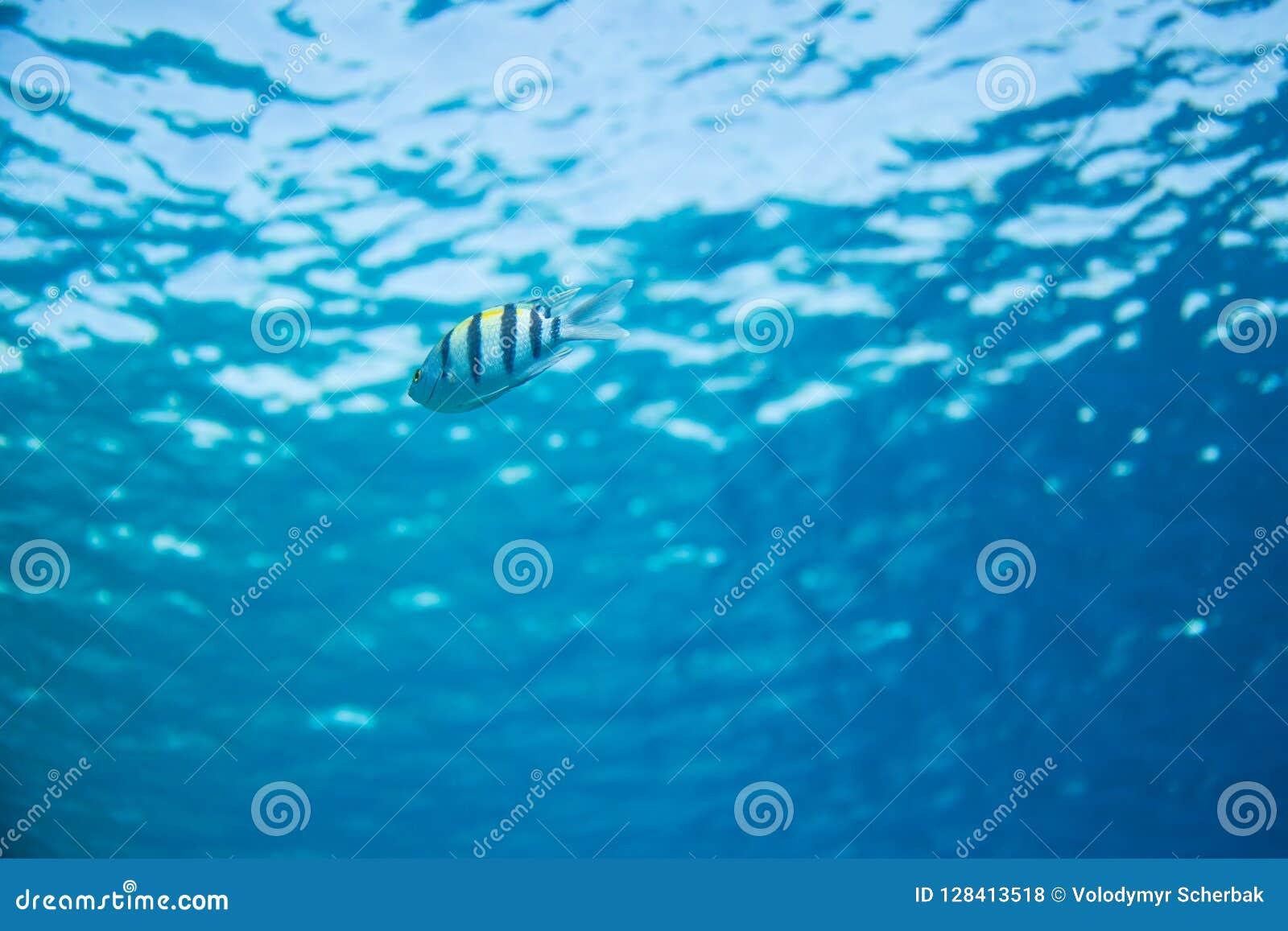 Visión inferior, superficie y pescados en submarino azul