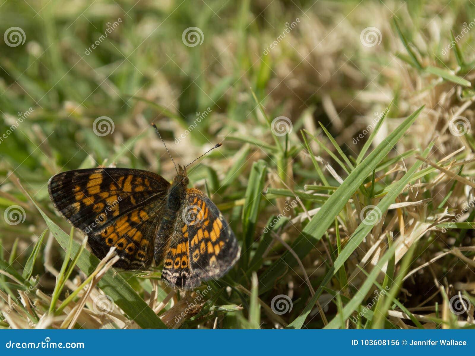 Visión superior, foto macra de una pequeña mariposa que está chupando el néctar de un pequeño wildflower