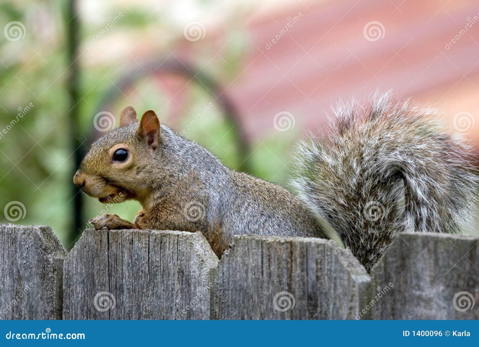 Visita do esquilo