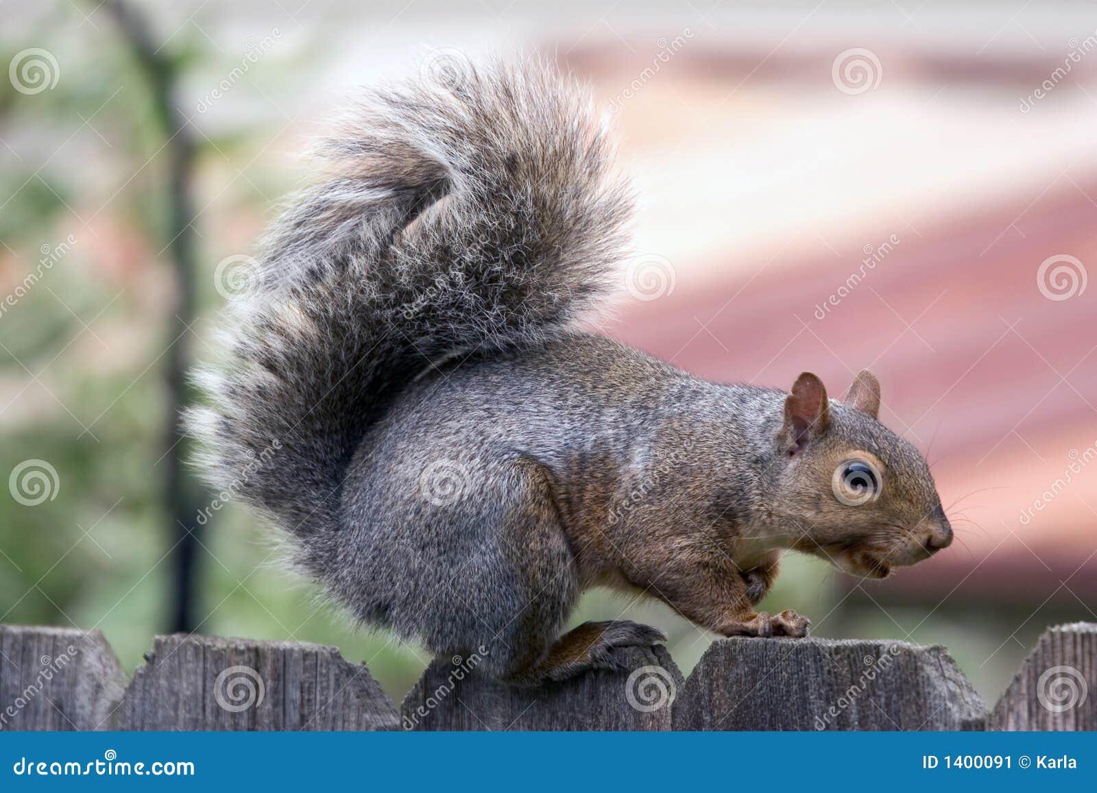 Visite d écureuil