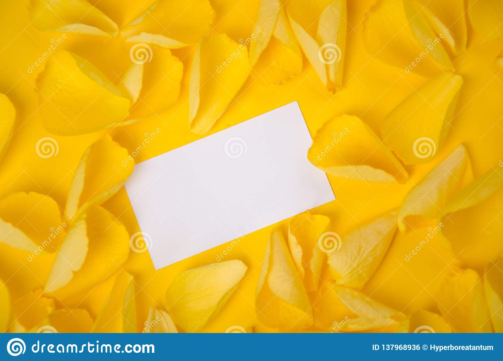 Visiting Card In Rose Petals On Solid Color Paper Background