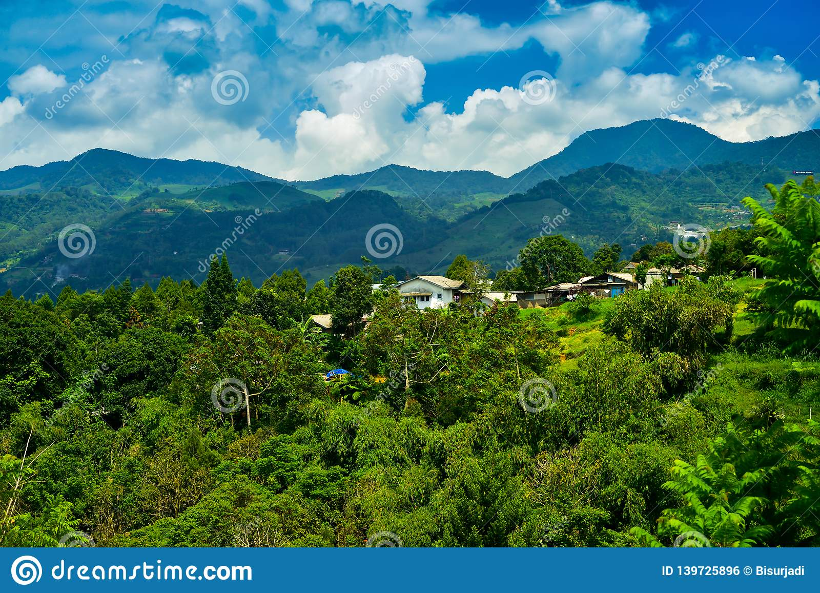 Rain And Moss Forest Mountain India Stock Photo - Image of