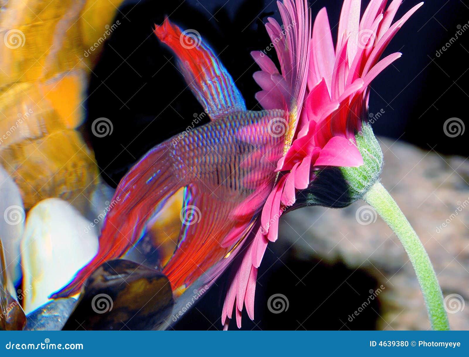 Vissen die bloem bestuderen