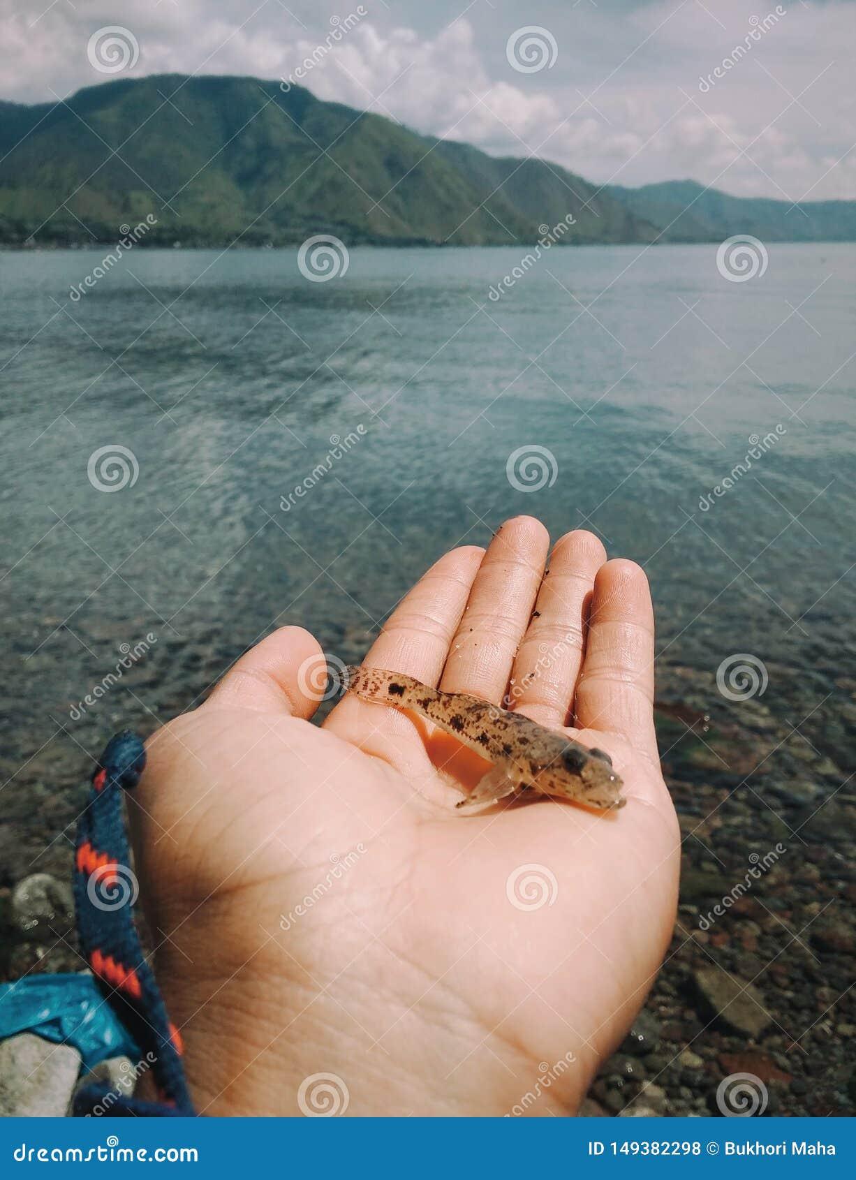 Vissen en mijn hand
