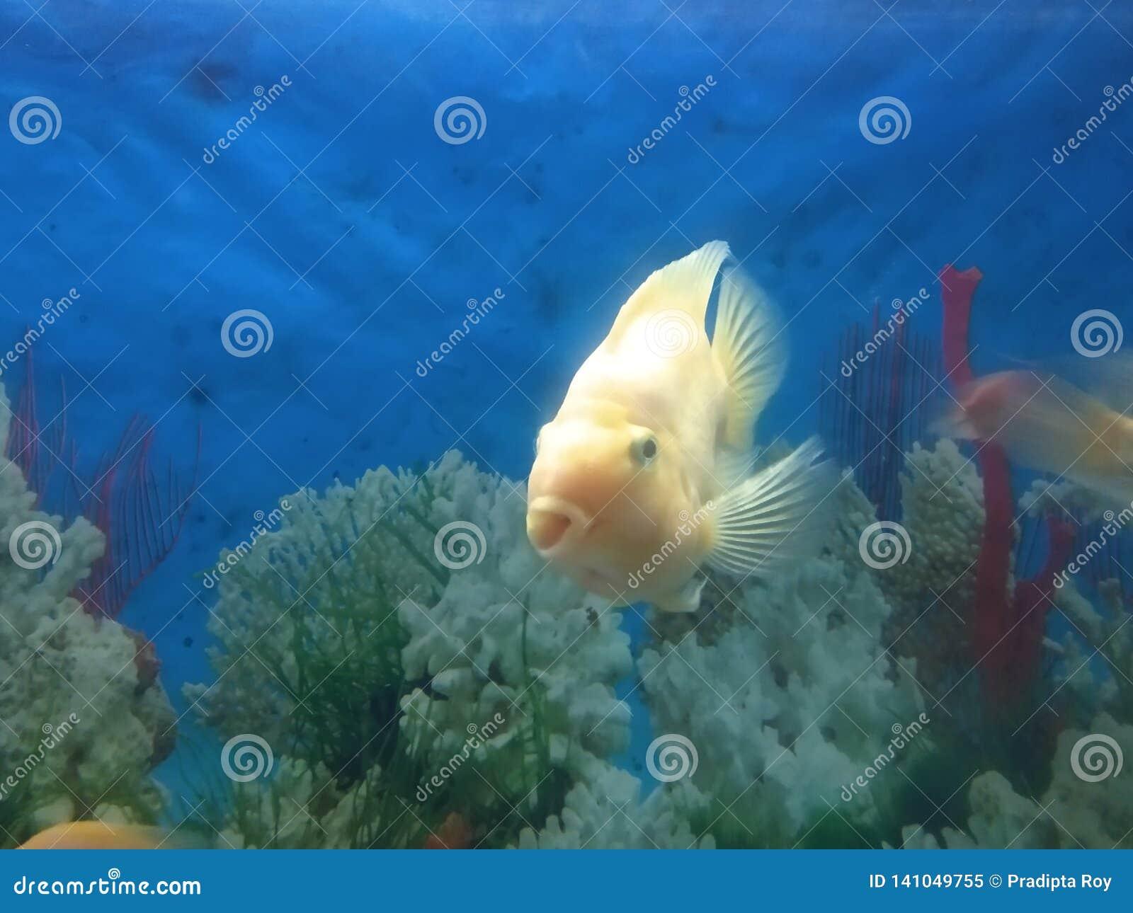 Vissen onderwater