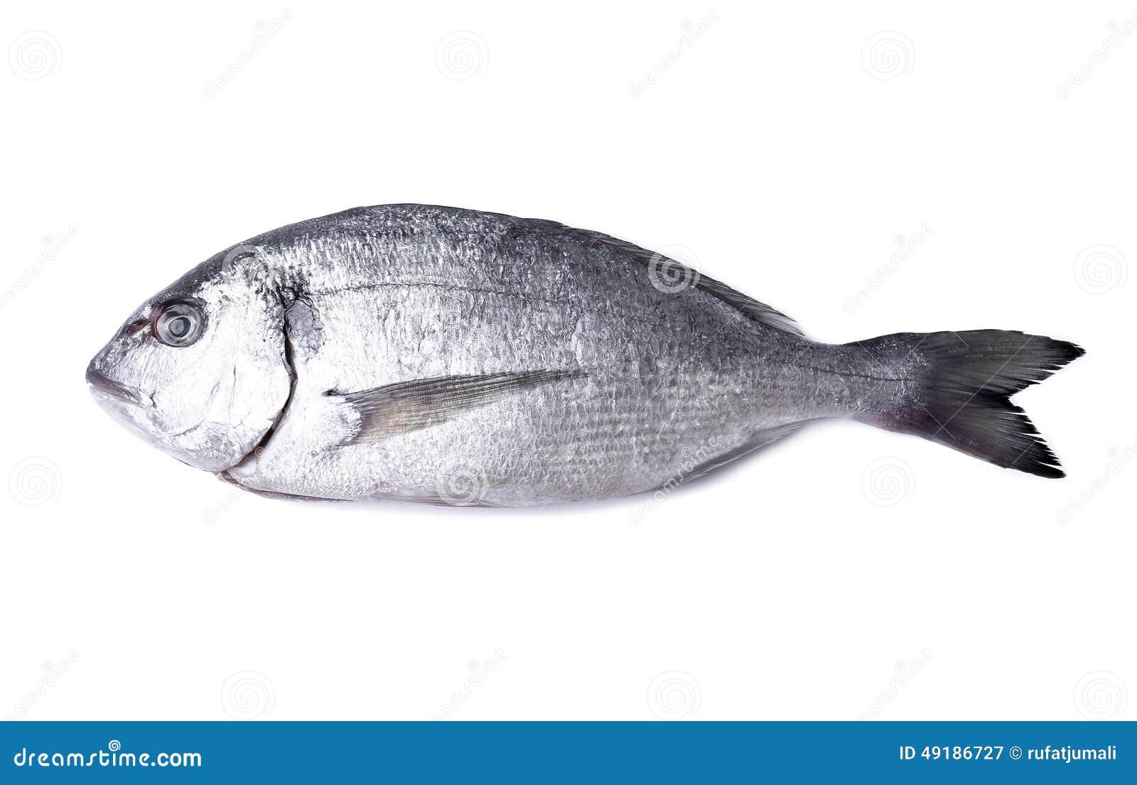 vissen lijst