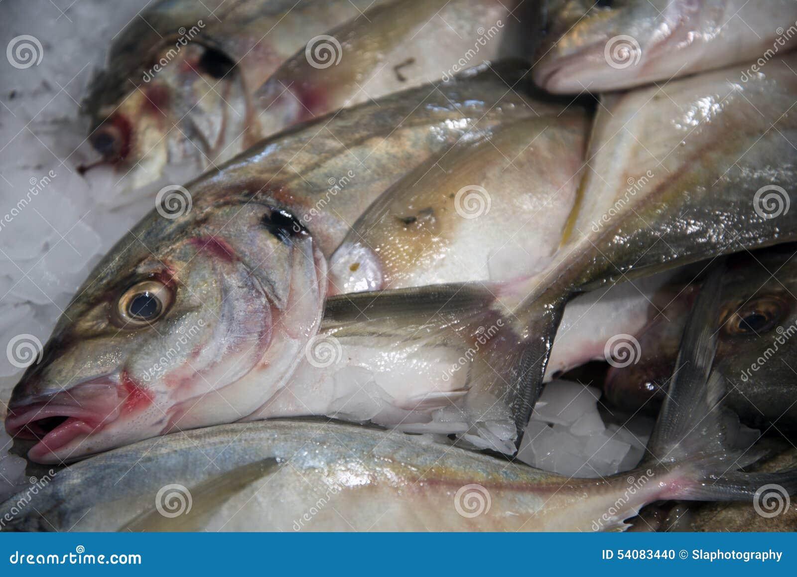 Vissen op Ijs 1