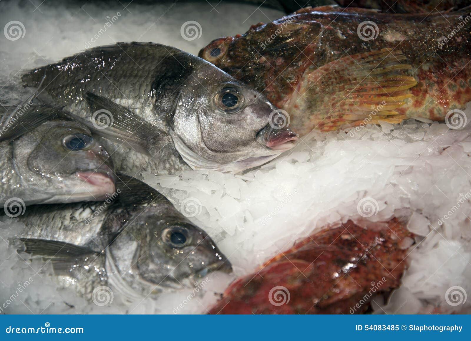 Vissen op ijs 2