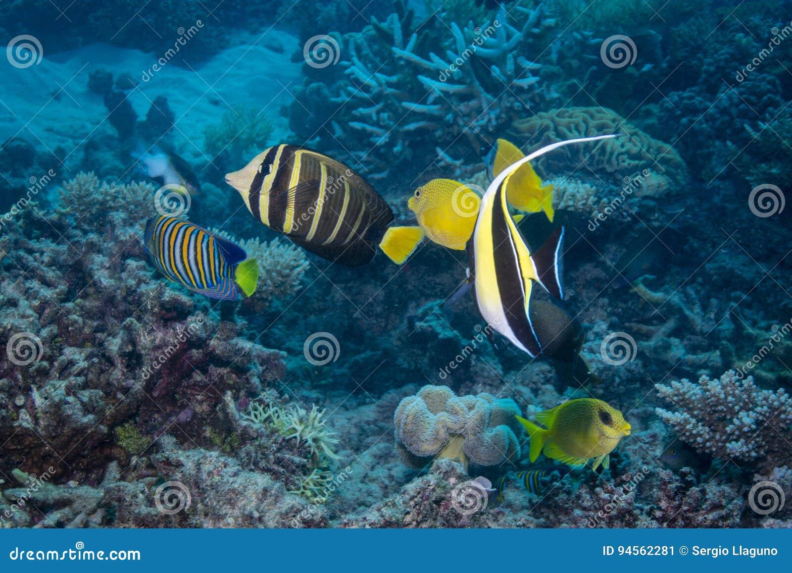 Visseninzameling