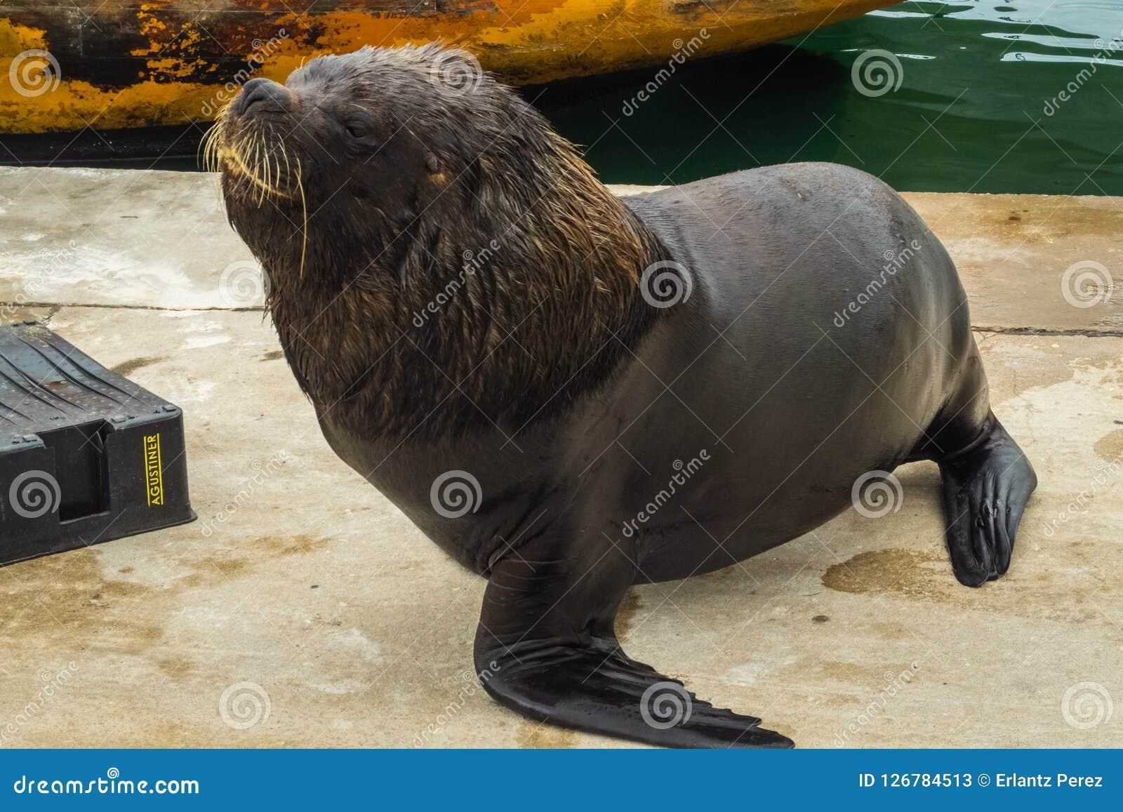 Vissershaven en zeeleeuwen, stad van Mar del Plata, Argentinië