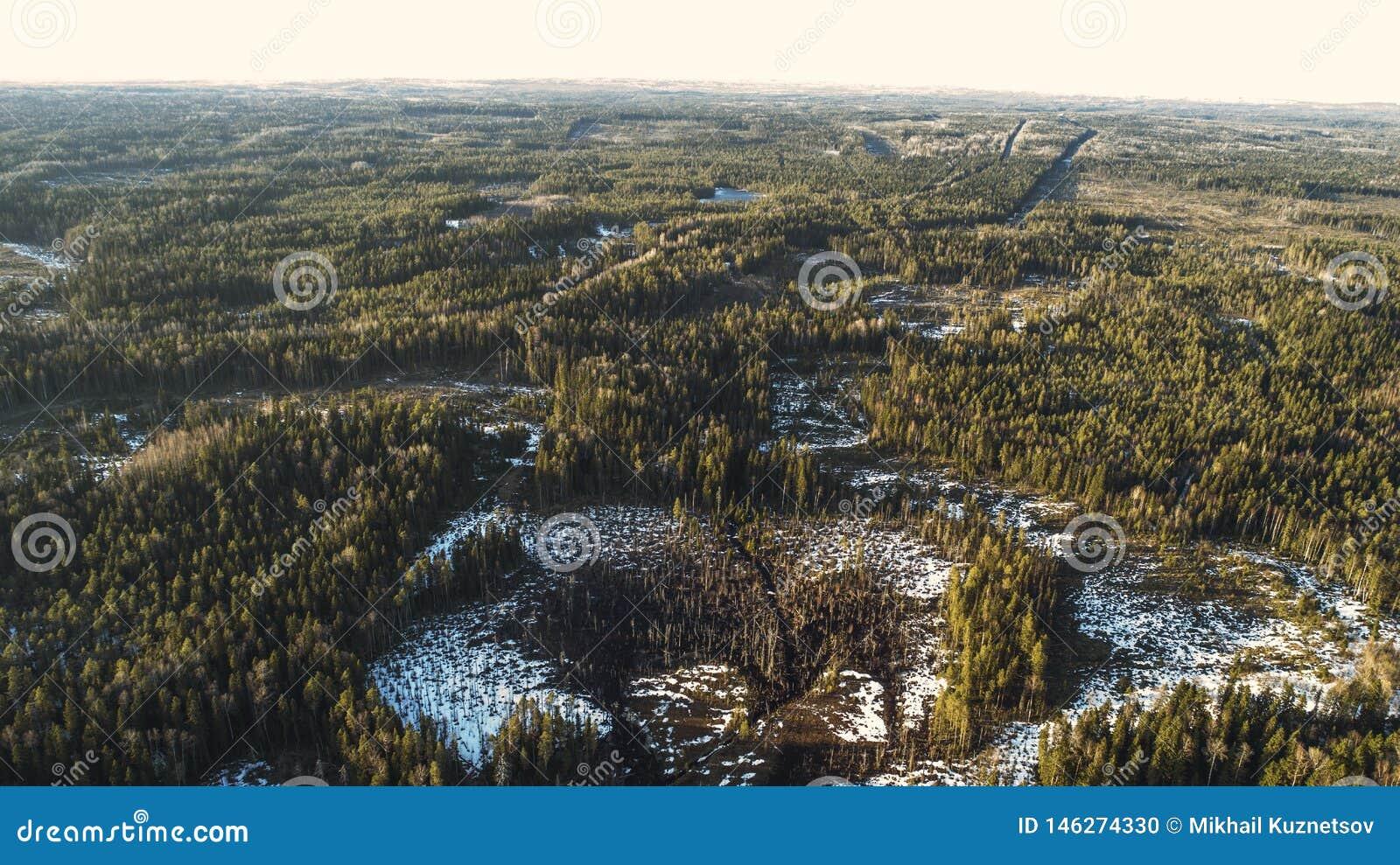 Vista aérea de la carretera de asfalto vieja en los derretimientos de la nieve del bosque de la primavera