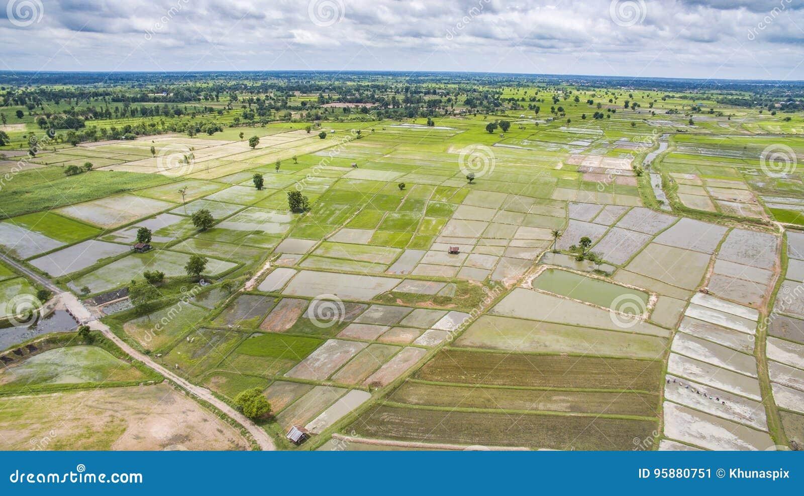 Vista Aérea De La Terraza Verde Del Arroz En El Campo