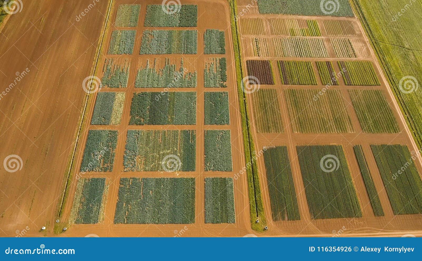 Vista aérea de las tierras de labrantío