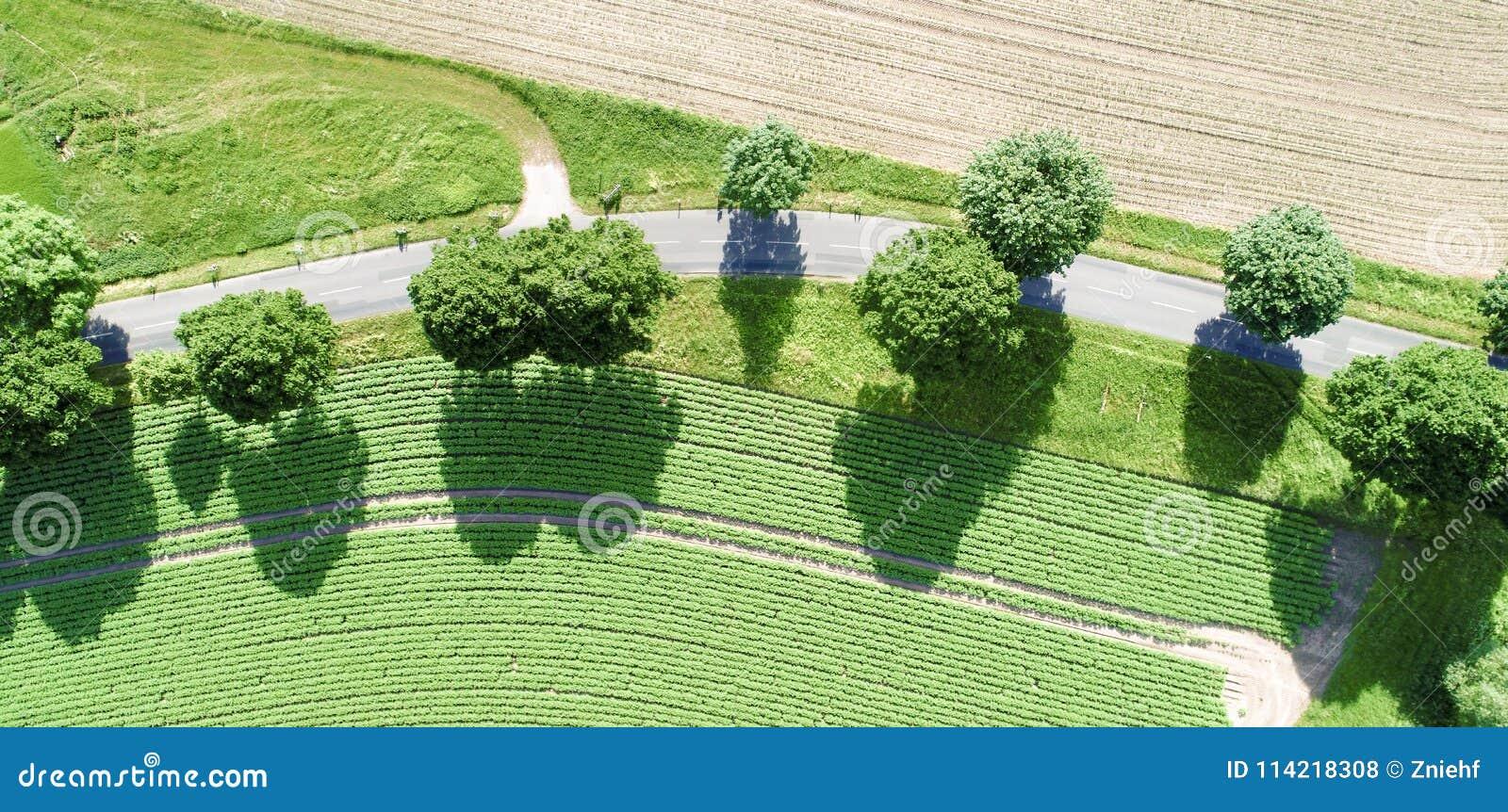 Vista aérea de una curva de una trayectoria con los árboles verdes magníficos a lo largo del camino