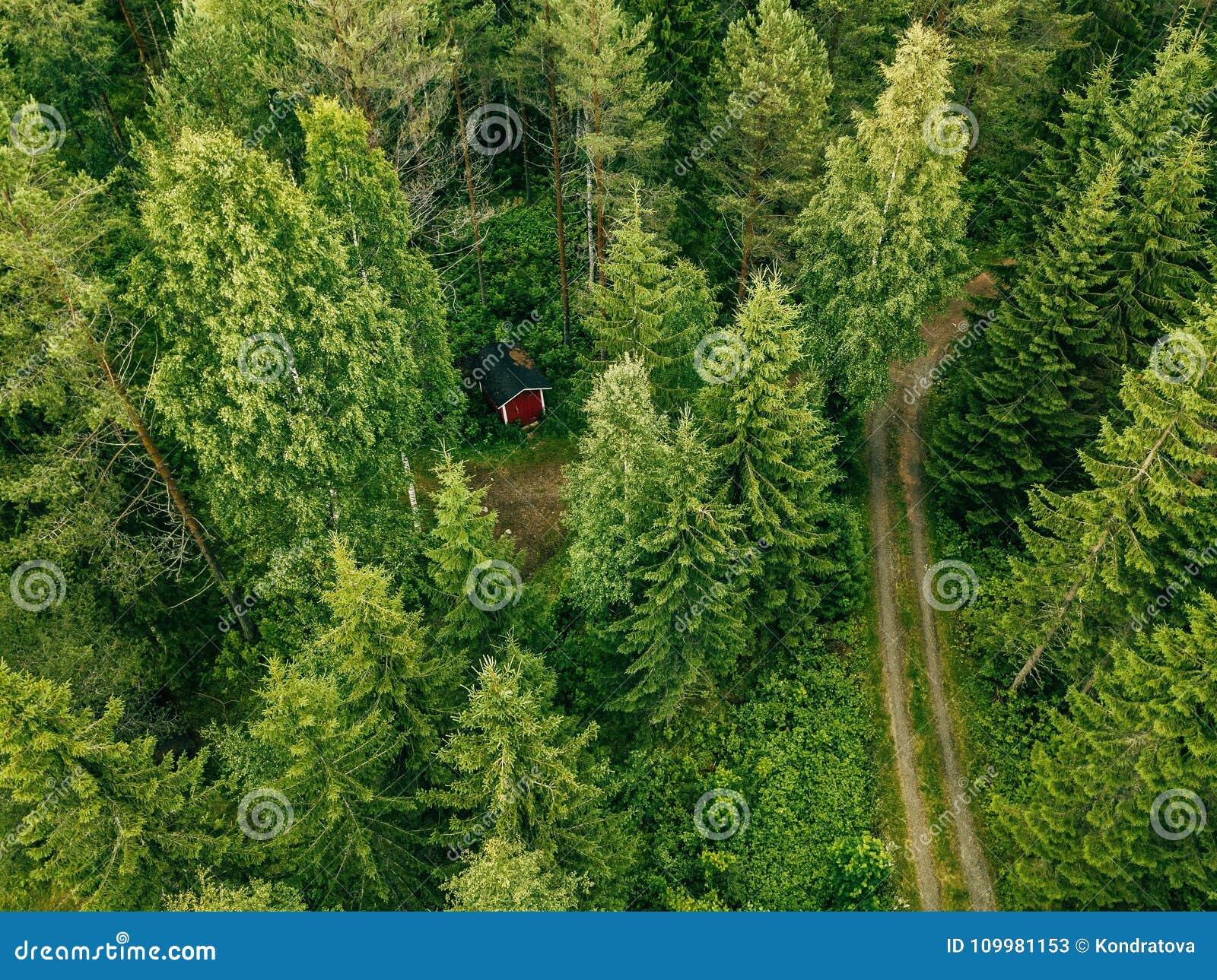 Vista aérea del camino a través de la cabina roja del bosque spruce en el bosque en Finlandia