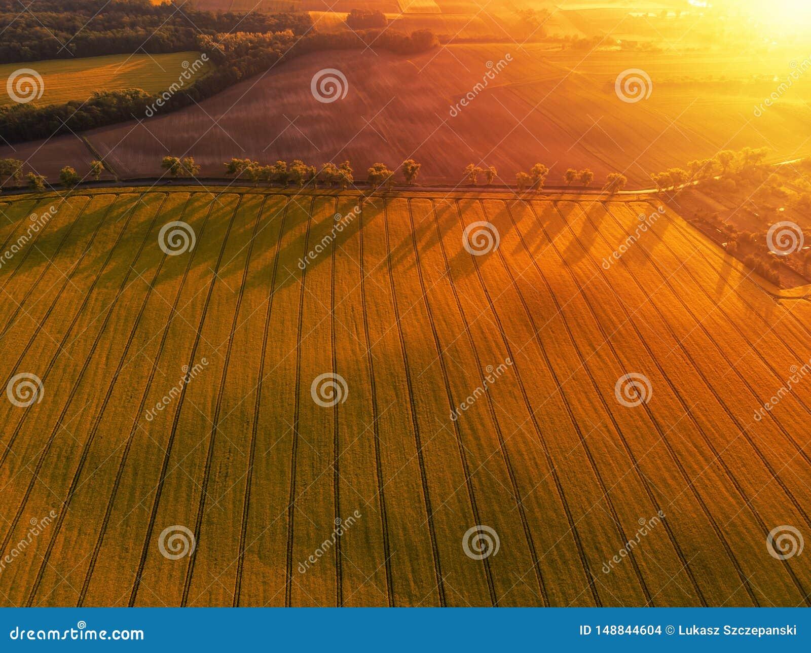 Vista aérea del campo amarillo del canola y de la carretera nacional distante