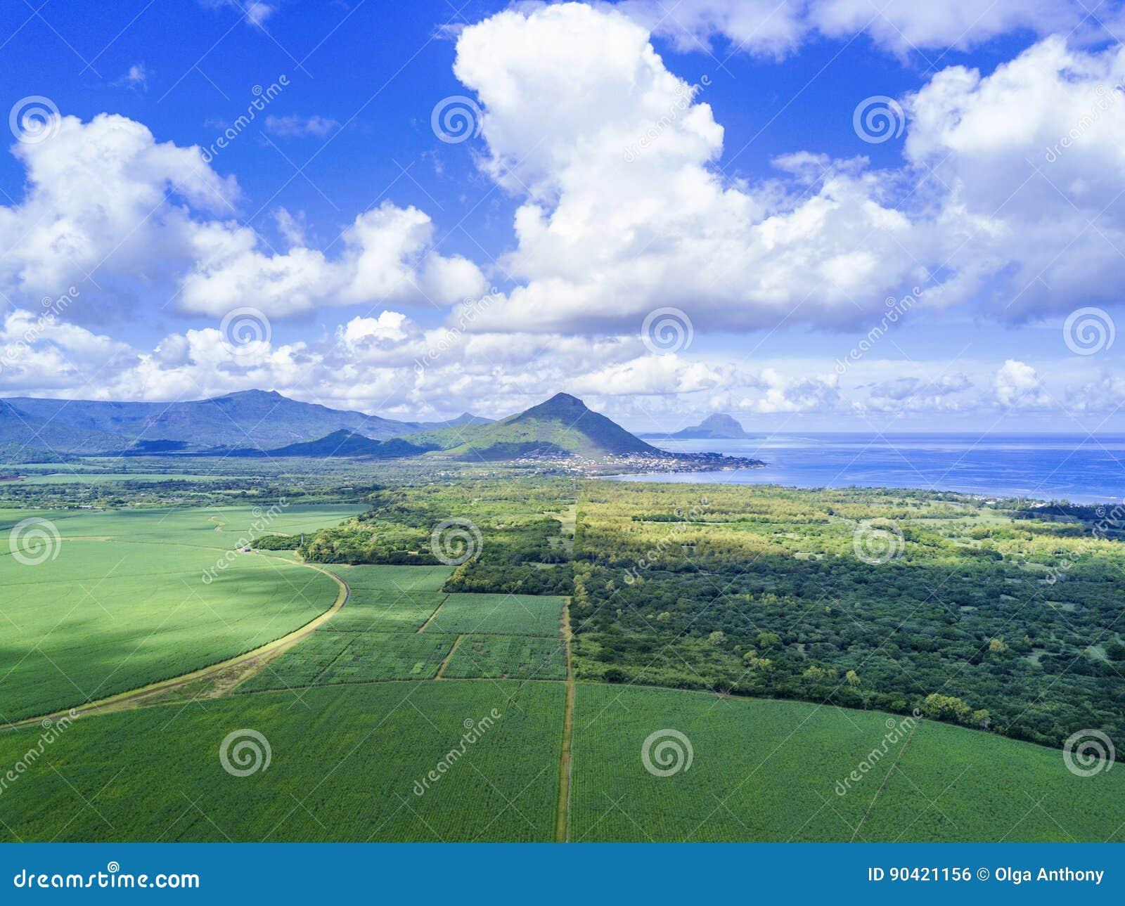 Vista aérea del campo de la caña de azúcar de Mauricio con las montañas