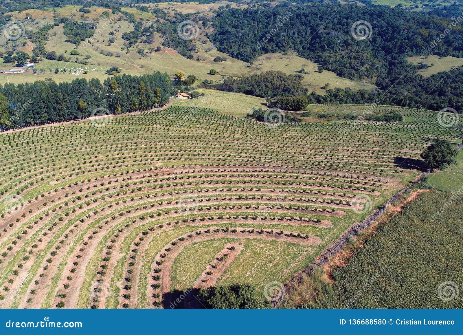 Vista aérea del campo rural de la escena y de la agricultura