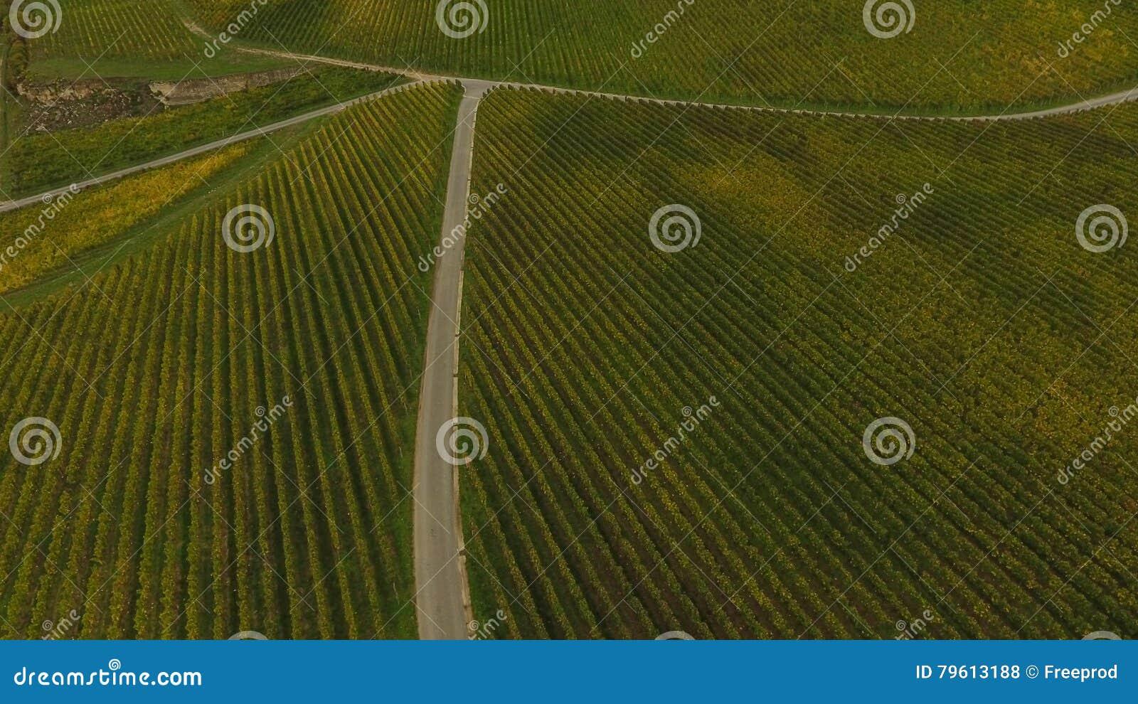 Vista aérea do vinhedo no outono, França de Saint Emilion